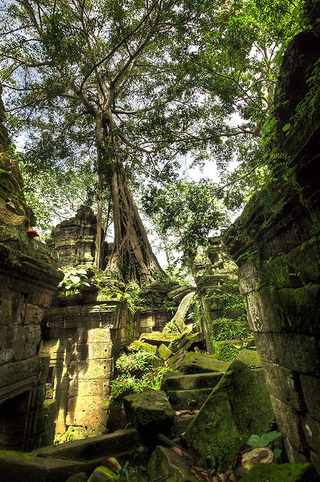 Kambodža s fotografem - Ta Prohm