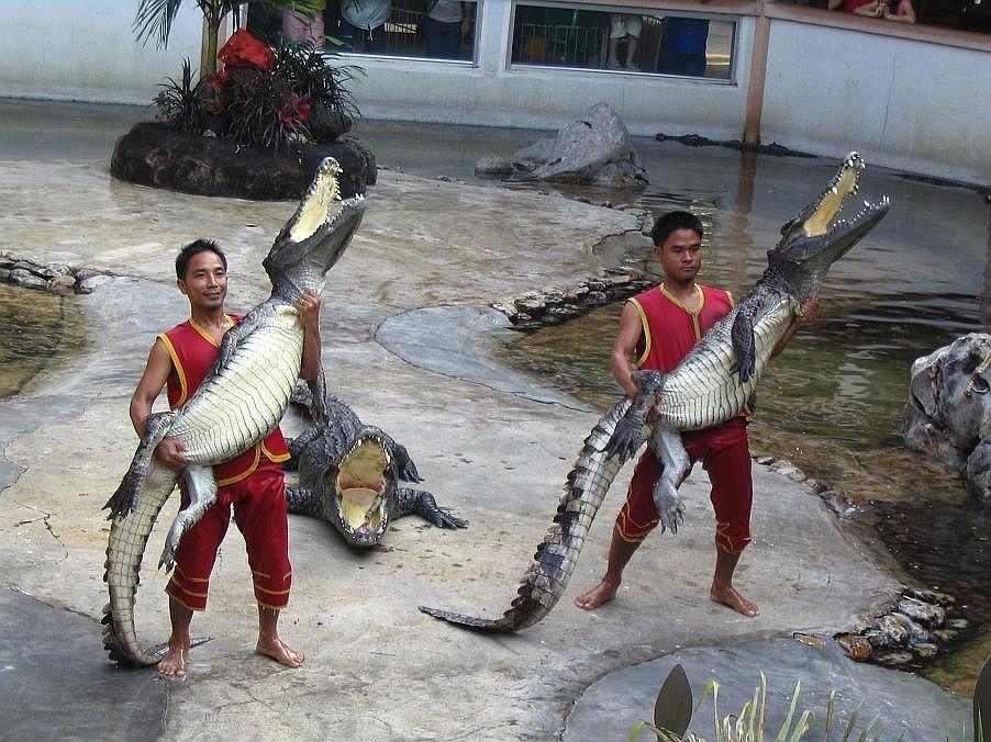 Samut Prakan Kroko (1)