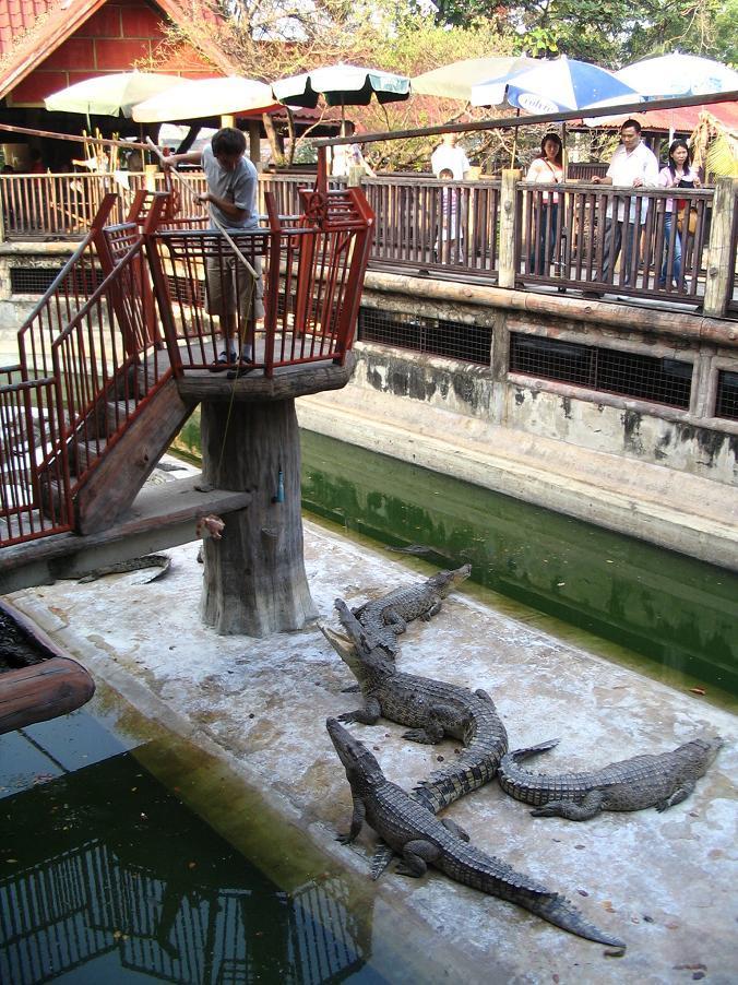 Samut Prakan Kroko (2)