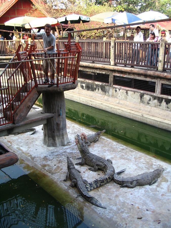 Samut Prakan Kroko (3)