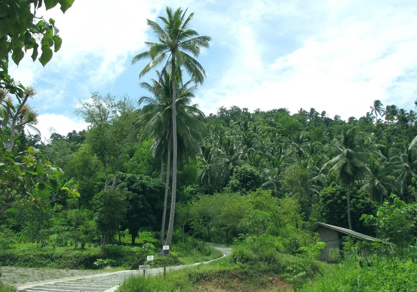 Cesta k meditační hale - Wat Dipabhávan - Ko Samui - Thajsko