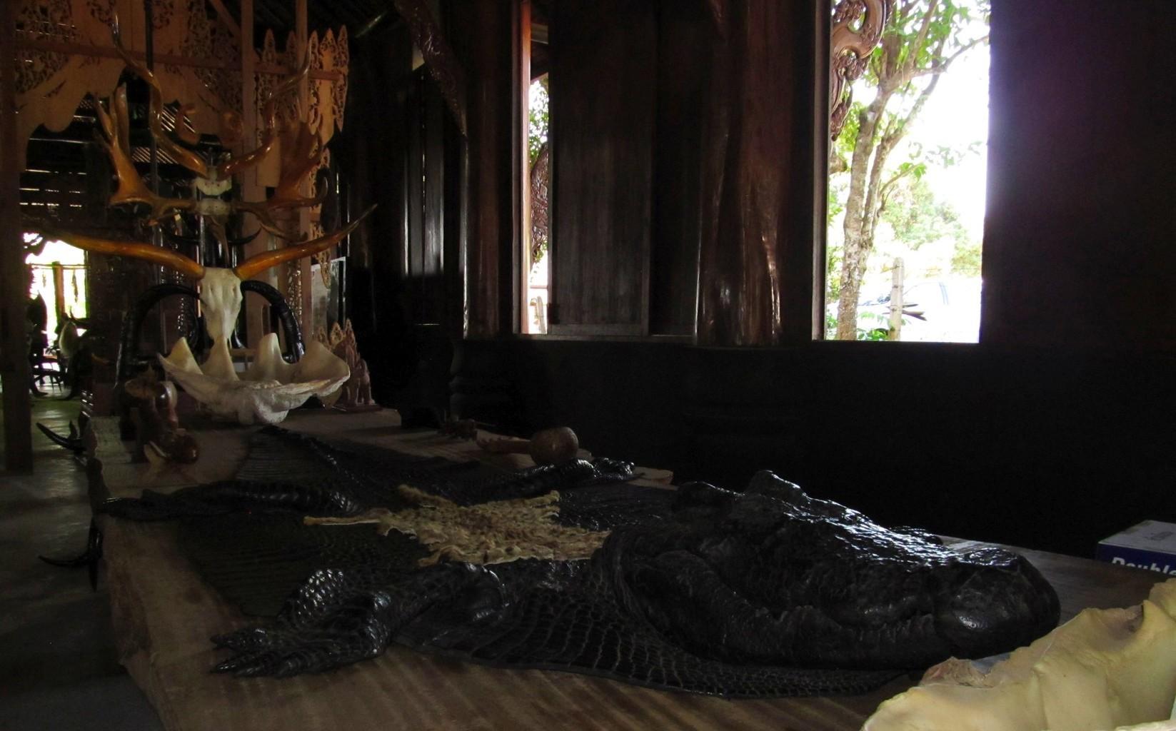 Krokodýlí kůže, lastury Zévy Obrovské¨- interiér - Černý klášter - Chiang Rai - Thajsko