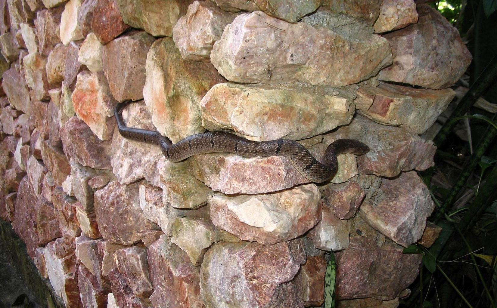 Ko Samui 2009 -Wat Dipabhavan