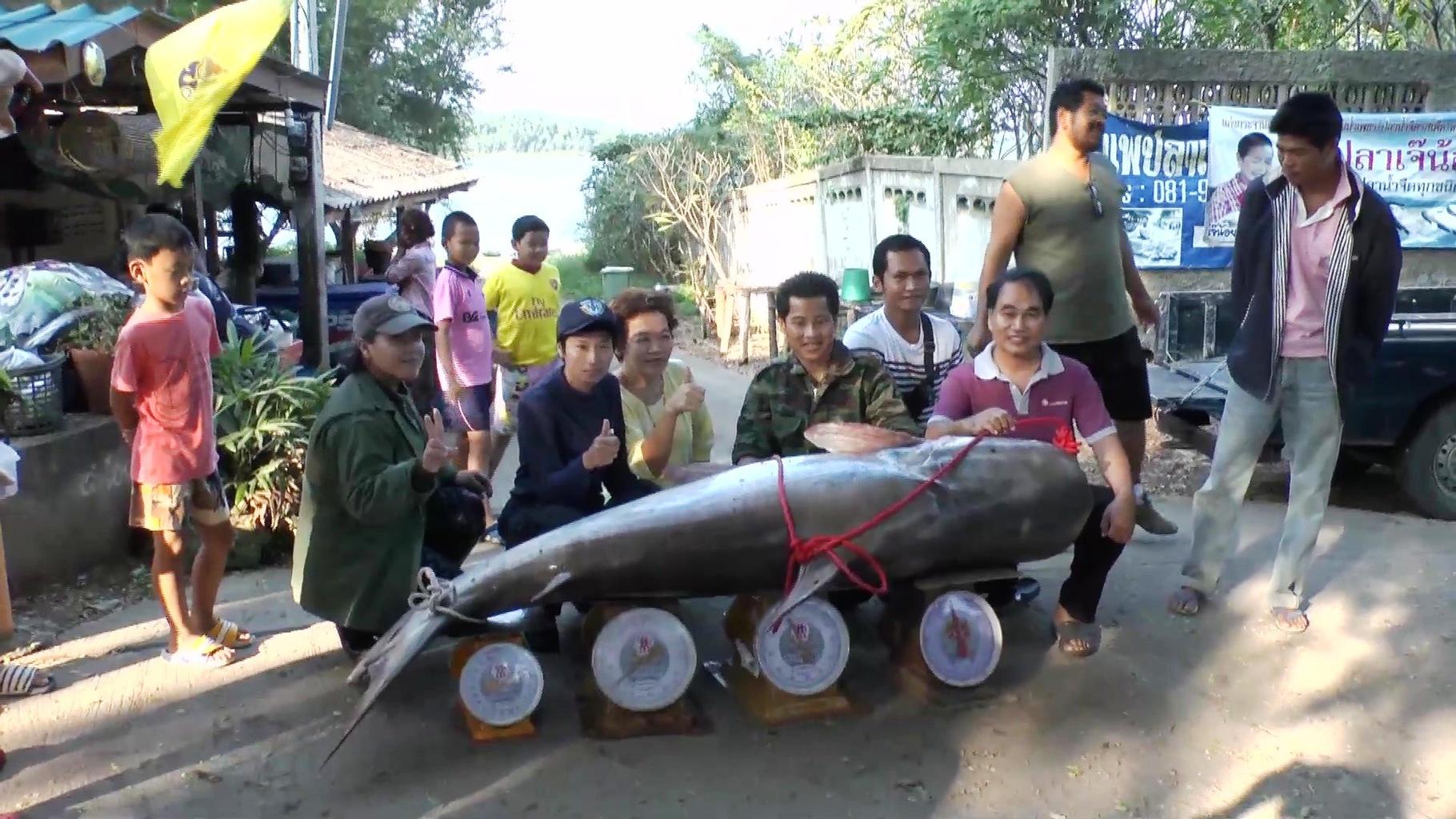 Obří sumec 162 Kg přehrada Kaeng Krachan Thajsko