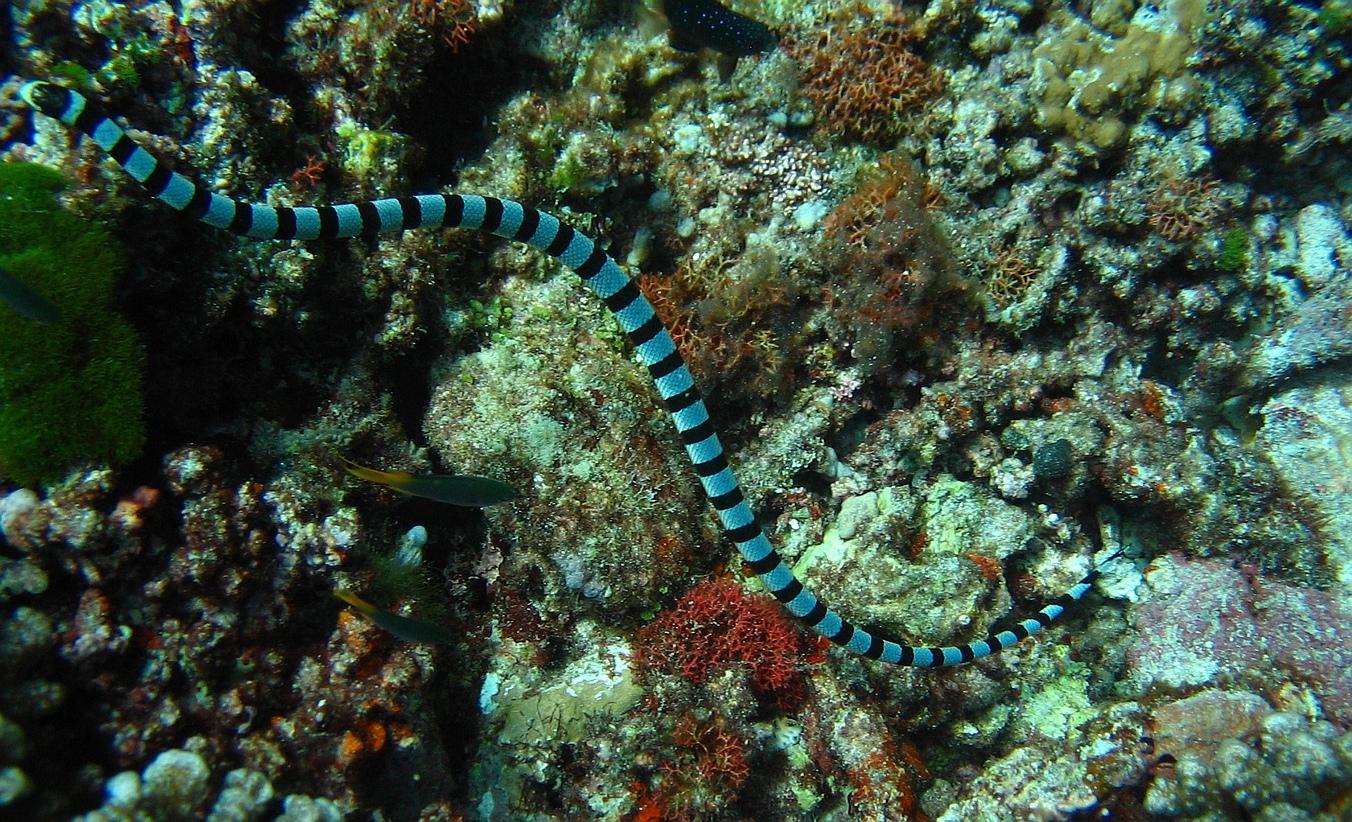 Mořští Hadi